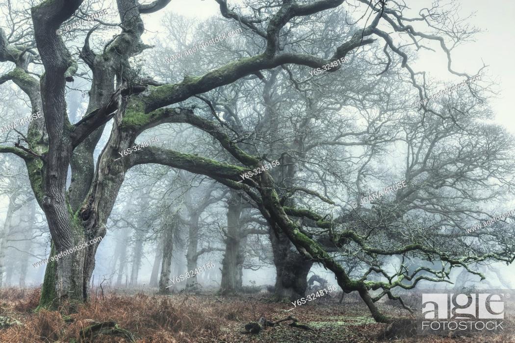 Imagen: Fritham, Sloden Inclosure, New Forest, Hampshire, England, UK.