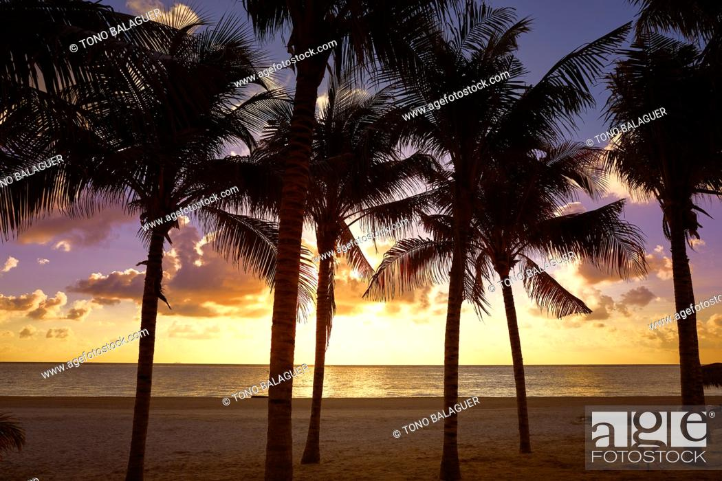 Stock Photo: Riviera Maya sunrise beach palm trees at Mayan Mexico.