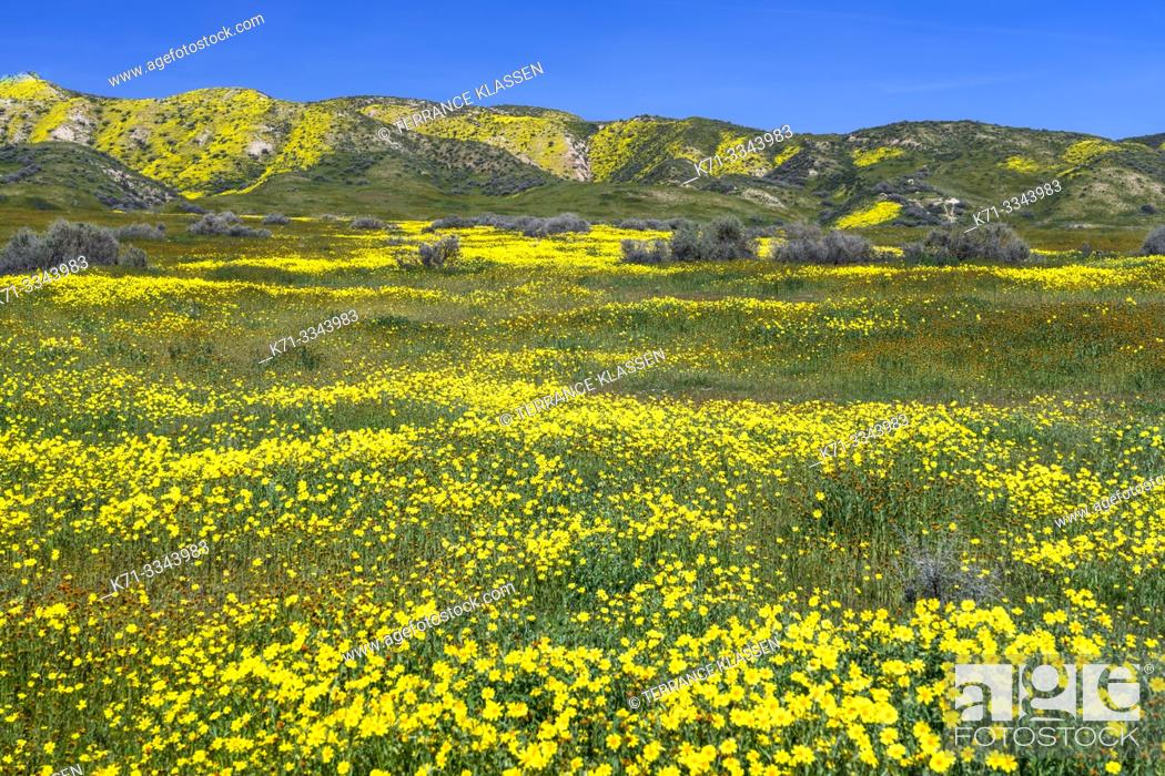 Stock Photo: The Carizzo Plain National Monument with wildflowers of the 2019 Superbloom, California, USA.