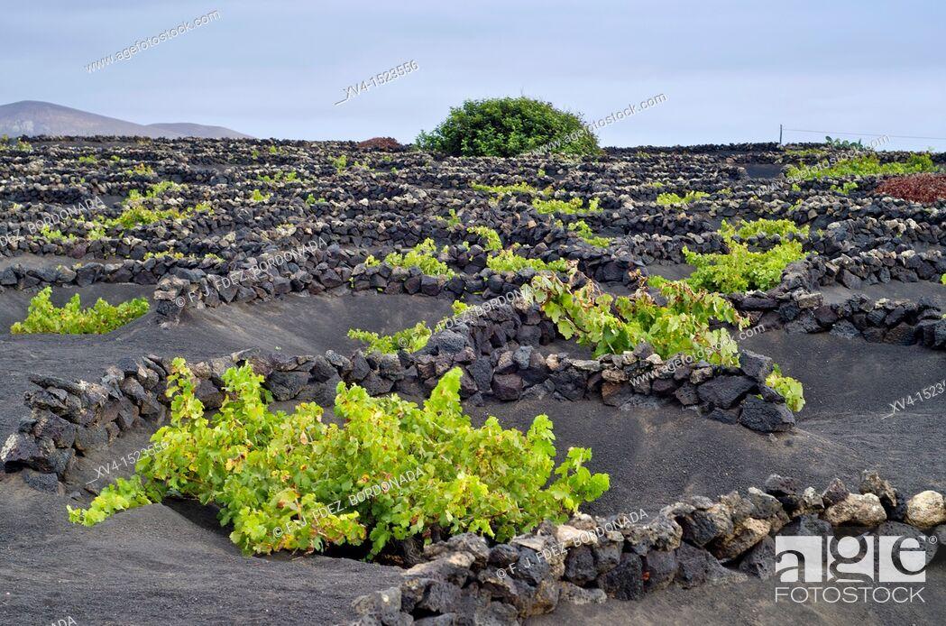 Stock Photo: La Geria landscape  Lanzarote, Canary Islands, Spain.