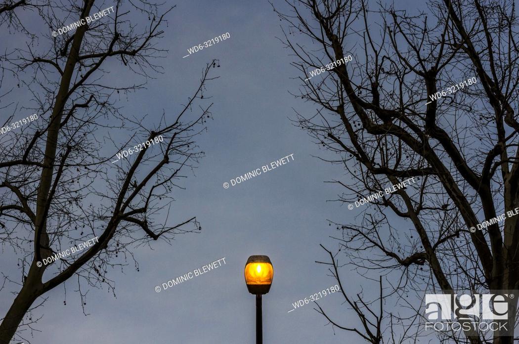 Imagen: An illuminated streetlight between bare winter branches in Berlin, Germany.