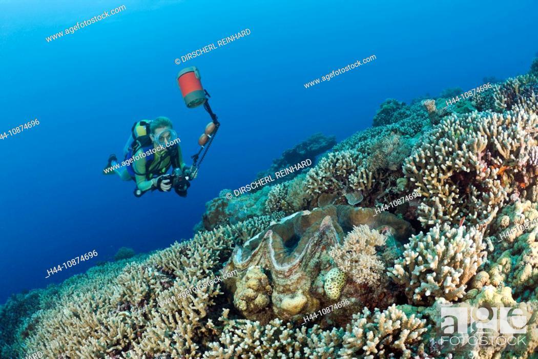Stock Photo: Taucher und Mördermuschel, Tridacna Squamosa, Mikronesien, Palau, Diver and Giant Clam, Tridacna Squamosa, Micronesia, Palau.