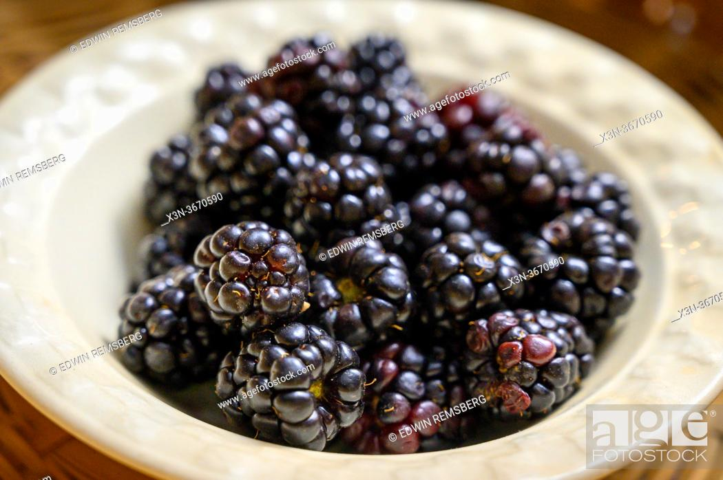 Stock Photo: Blackberries (Rubus) waiting to be eaten from bowl, Fallston, MD.