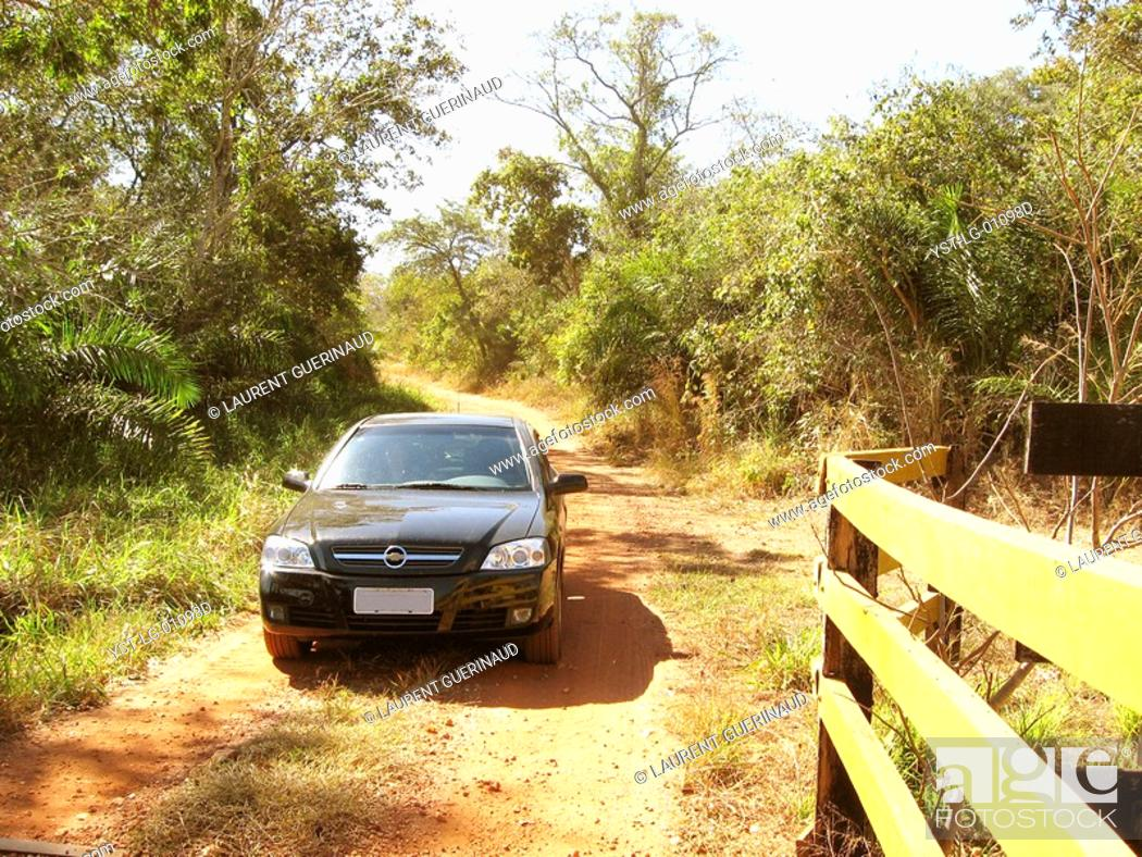 Stock Photo: Dirt road, Pantanal, Mato Grosso do Sul, Brazil.