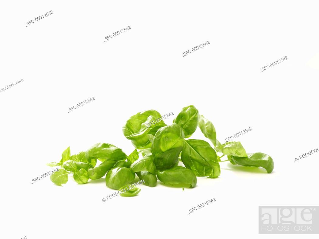 Stock Photo: Fresh basil.