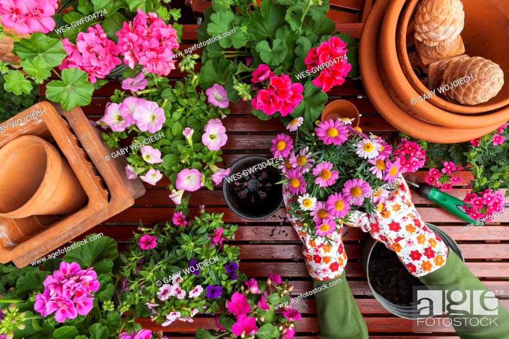 Stock Photo: Gardening, different spring and summer flowers, flower box and gardening tools, potting.