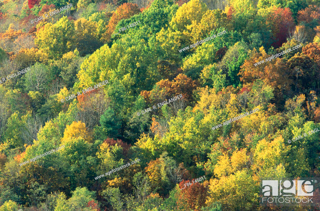 Stock Photo: Deciduous Forest in the autumn. Shenandoah National Park. Virginia. USA.