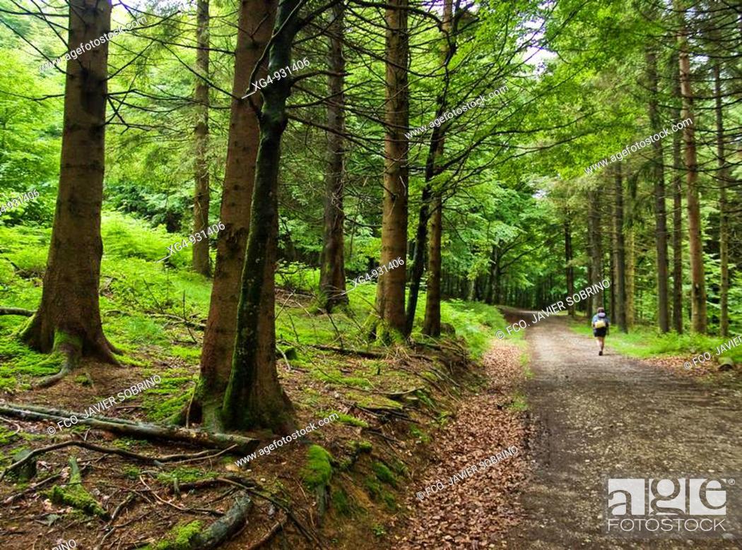 Stock Photo: Senderista atravesando un bosque en el sendero de gran recorrido GR 11 (senda pirenaica), en las inmediaciones del Puerto de Urkiaga - Valle de Erro - Navarra -.