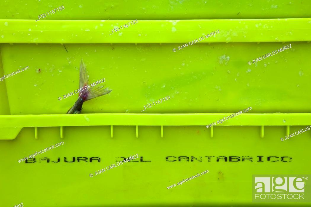 Stock Photo: Fish crates at port, Santoña, Cantabrian Sea, Cantabria, Spain.