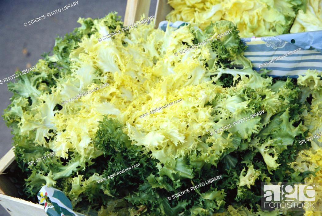 Stock Photo: 'Endive.  Endive (Chicorium endivia) leaves are used in salads.