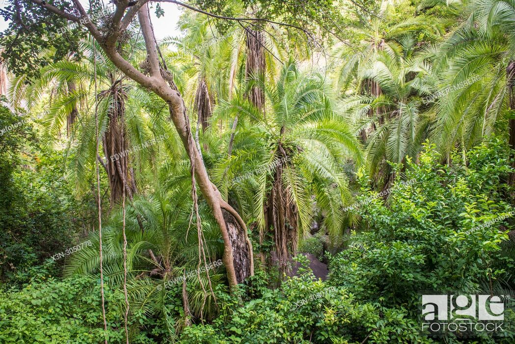 Stock Photo: The tropical, lush vegetation of the Victoria Falls Rainforest. Victoria Falls, Zambia.