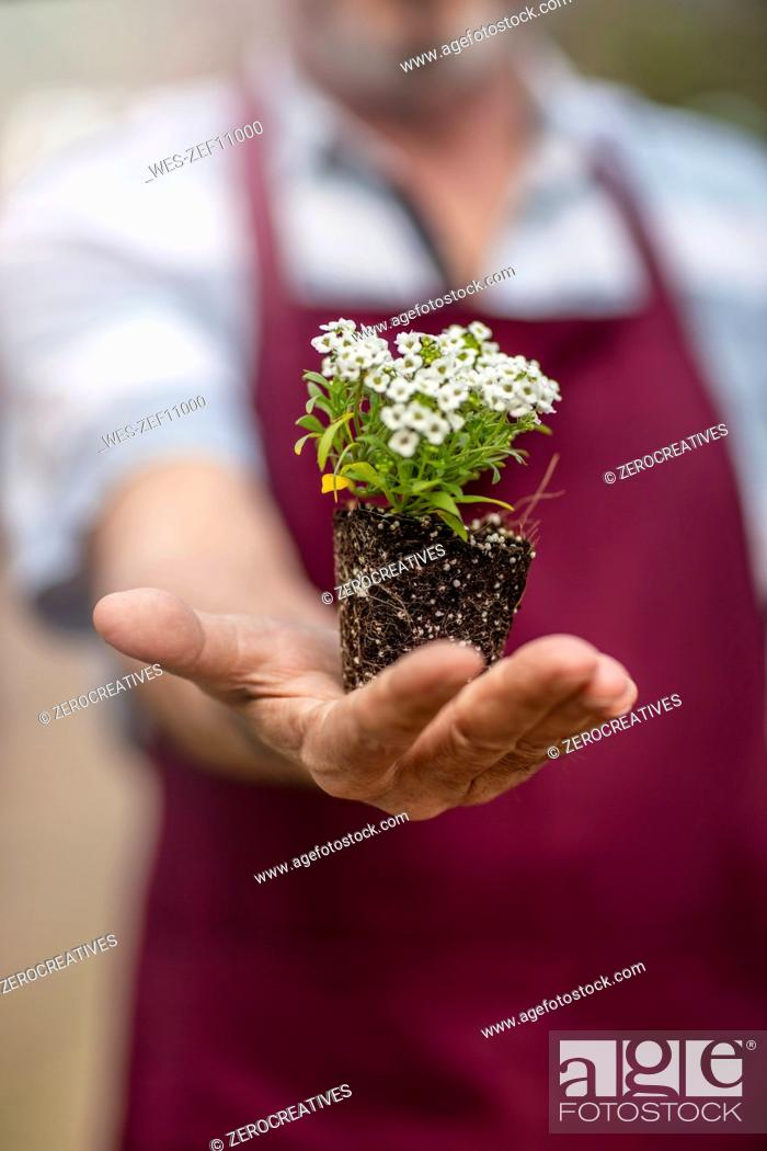 Stock Photo: Gardener in garden center holding flowers.