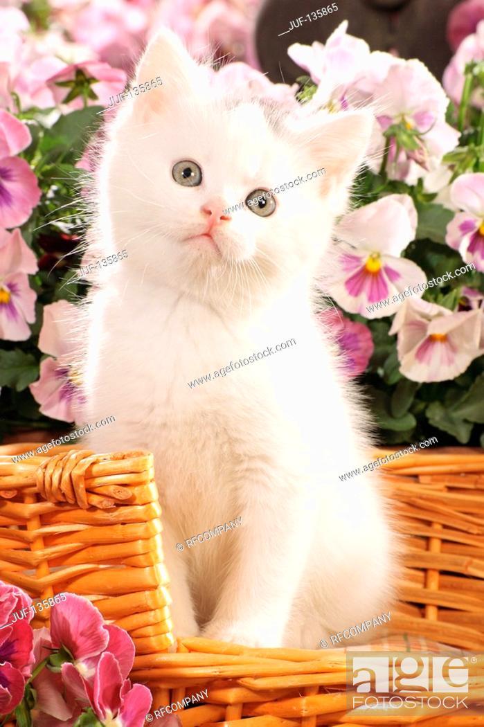 Imagen: kitten in basket.