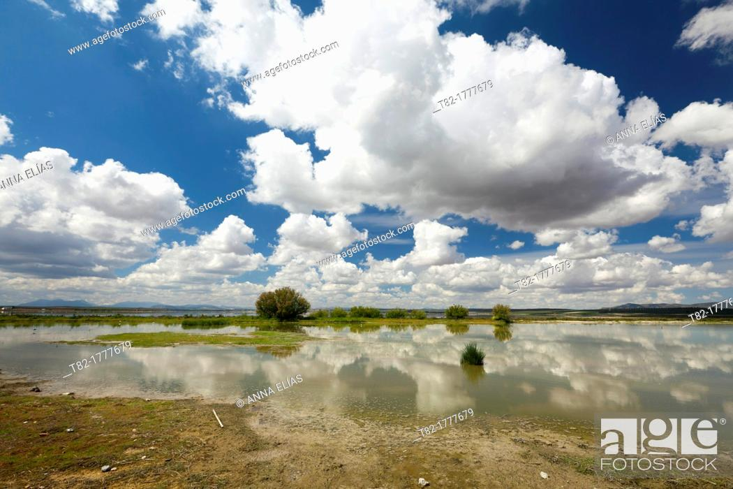 Stock Photo: lagoon and white clouds reflected, Nature, aquifer Laguna de Fuente de Piedra, Malaga, Andalucia, Spain, Europe.