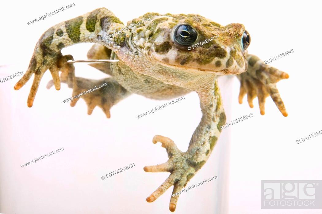 Stock Photo: animals, curiosity, close, climb, alfred.