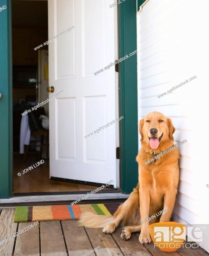 Stock Photo: Dog on porch with bowl next to open door.
