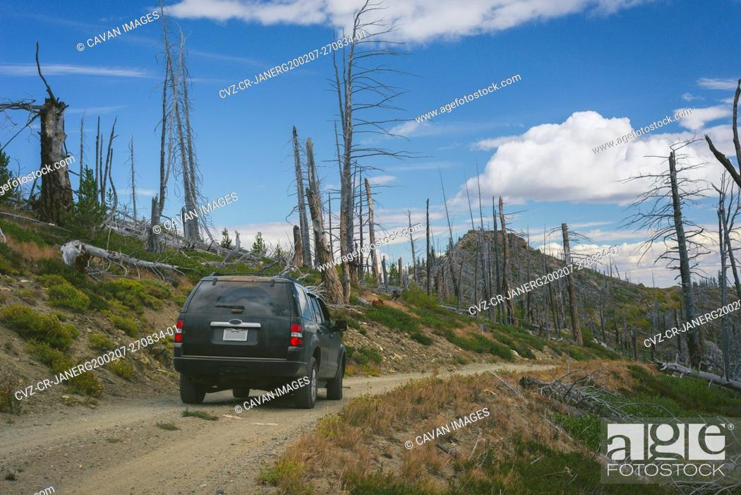 Imagen: SUV On Gravel Road In The Mountains Surrounded By Dead Burned Trees.