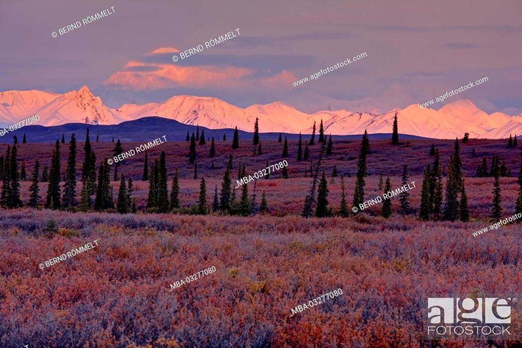 Photo de stock: North America, the USA, Alaska, Denali National Park, Alaska Range, tundra, blueberry bushes, Mount McKinley, Mount Denali,.