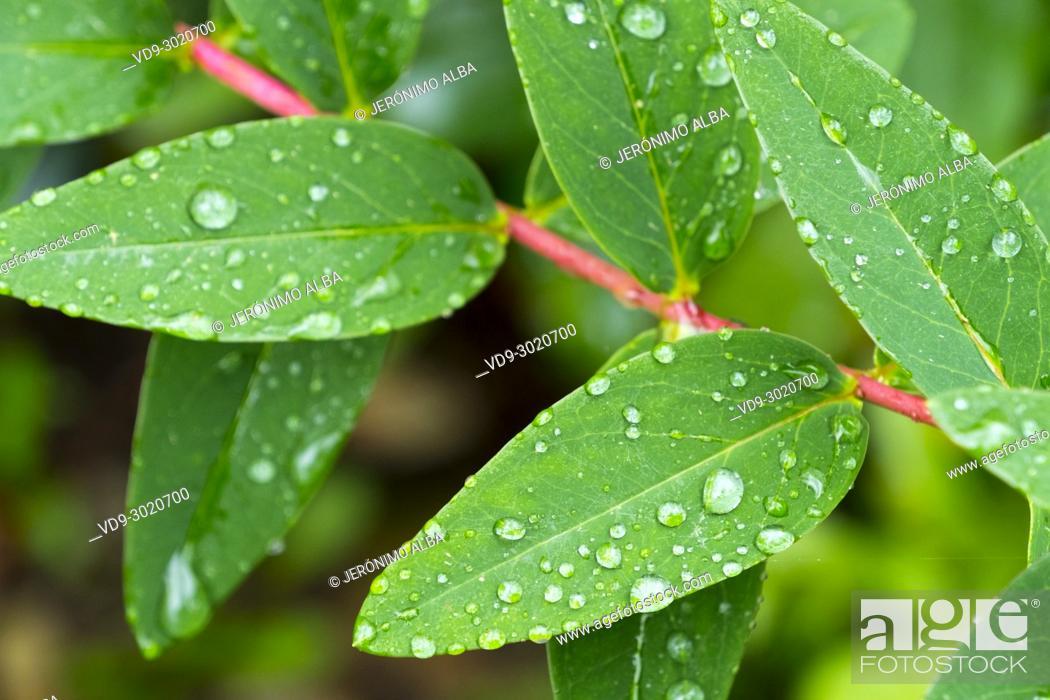 Stock Photo: Nature. Raindrops on a green leaf. Saja Natural Park, Saja-Nansa, Cantabria, Spain Europe.