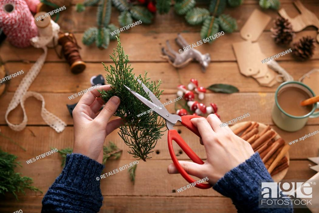 Stock Photo: Woman's hands cutting twig for decorating Christmas present.