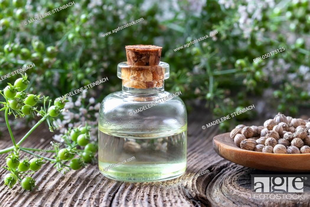 Stock Photo: A bottle of essential oil with coriander seeds and blooming cilantro plant.