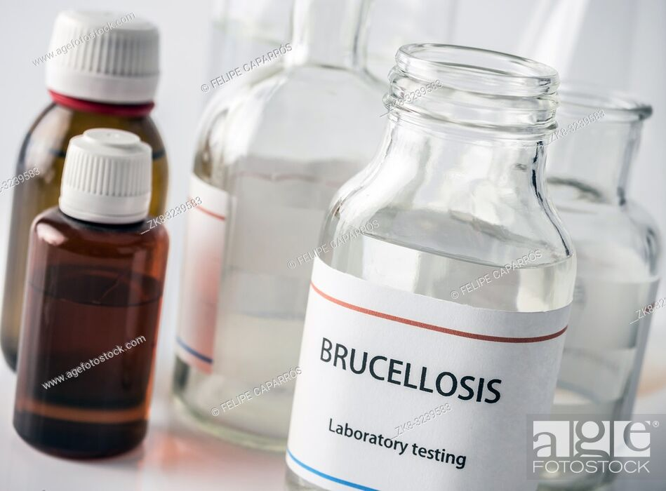 Stock Photo: Test brucellosis in laboratory, conceptual image, composition horizontal.