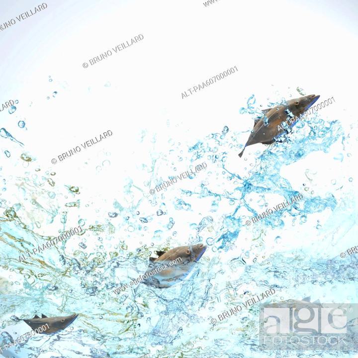 Stock Photo: Fish jumping.