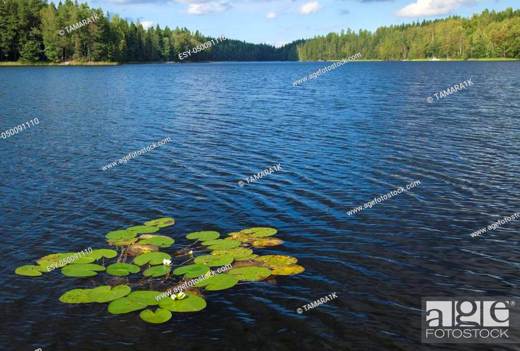 Stock Photo: finnish summer lake with flowering waterlilies.