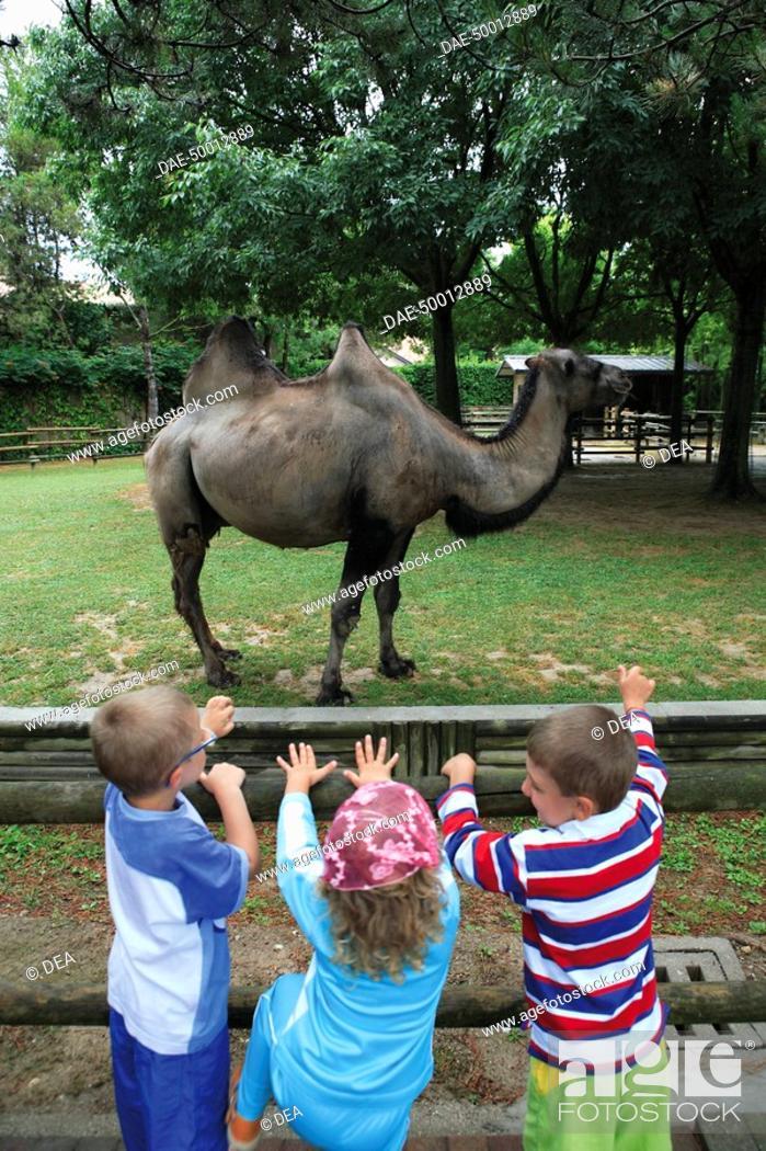 Stock Photo: Italy - Friuli-Venezia Giulia Region - Udine Province - Lignano Sabbiadoro. Kids look at camel at Lignano Pineta's Punta Verde zoological park.