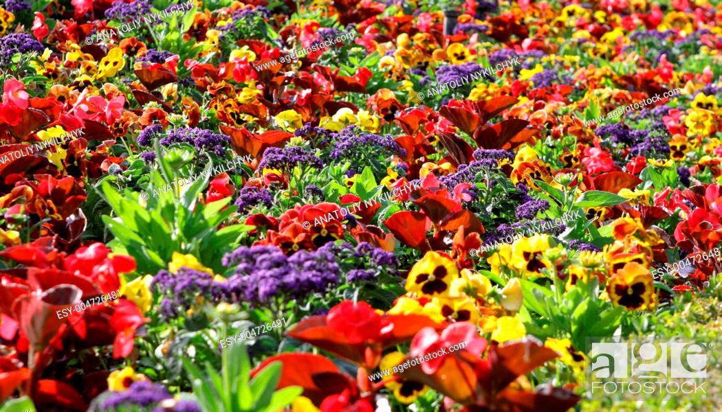 Stock Photo: flowers garden.