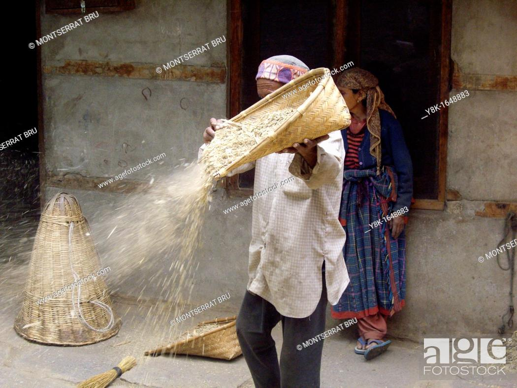 Stock Photo: Man winnowing cereal in his yard in Vashist, Himachal Pradesh, India.
