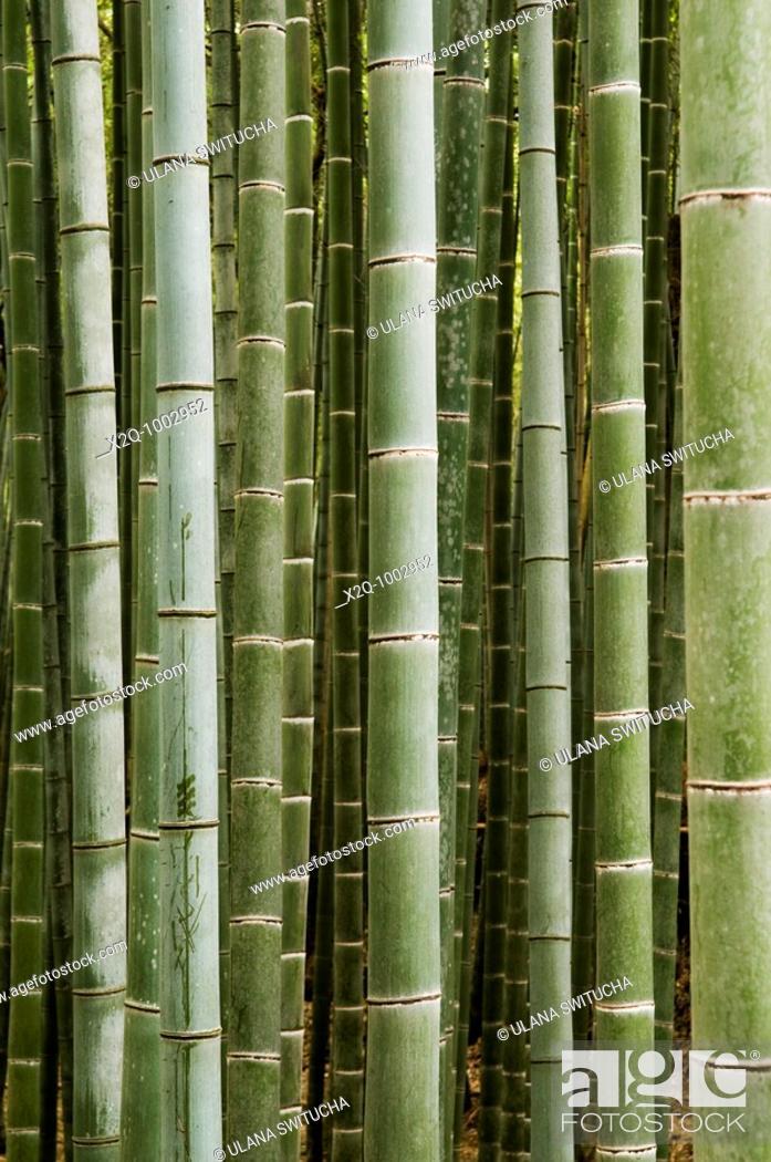 Stock Photo: Bamboo grove in Arashiyama Japan.
