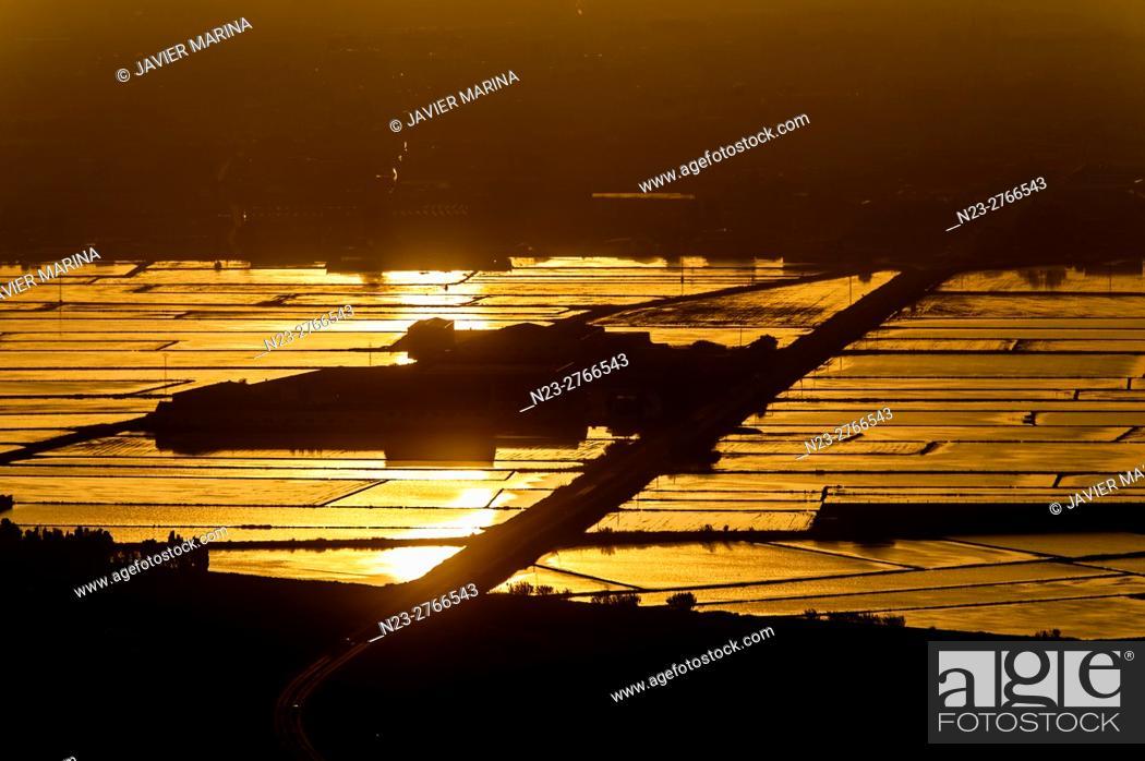 Stock Photo: Rice fields, Cullera, Valencia, Spain.