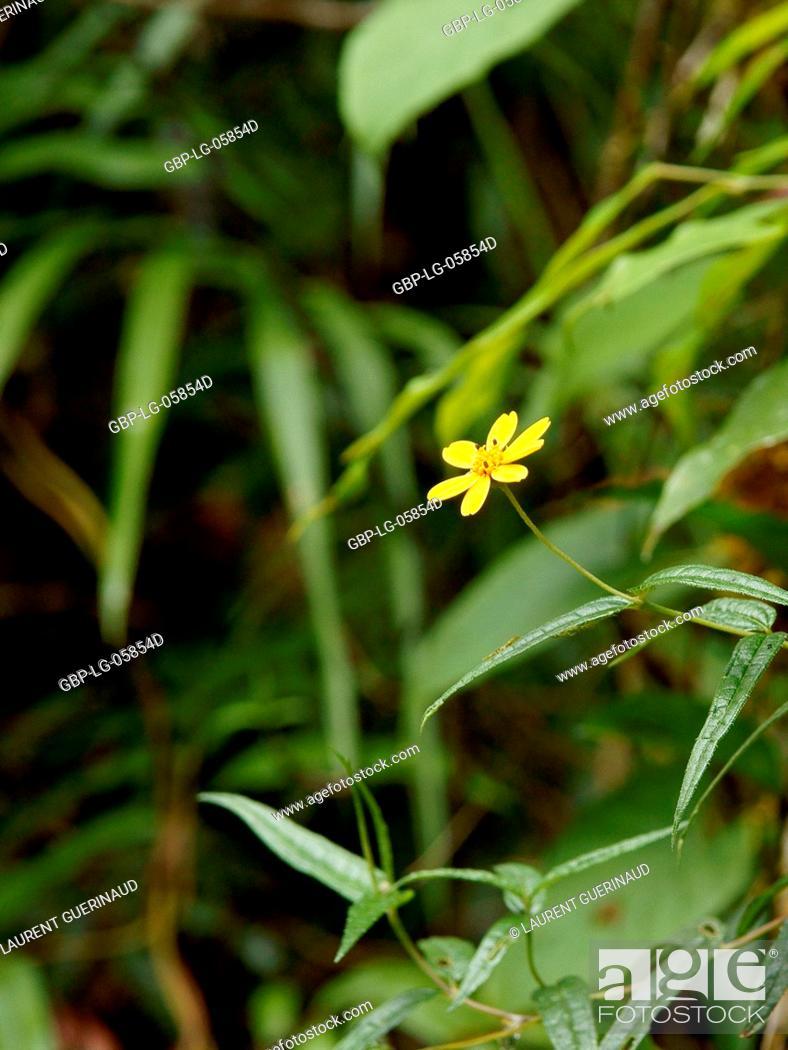 Stock Photo: Forest, Flower, Serra do Mar State park, Núcleo Santa Virgínia, São Paulo, Brazil.