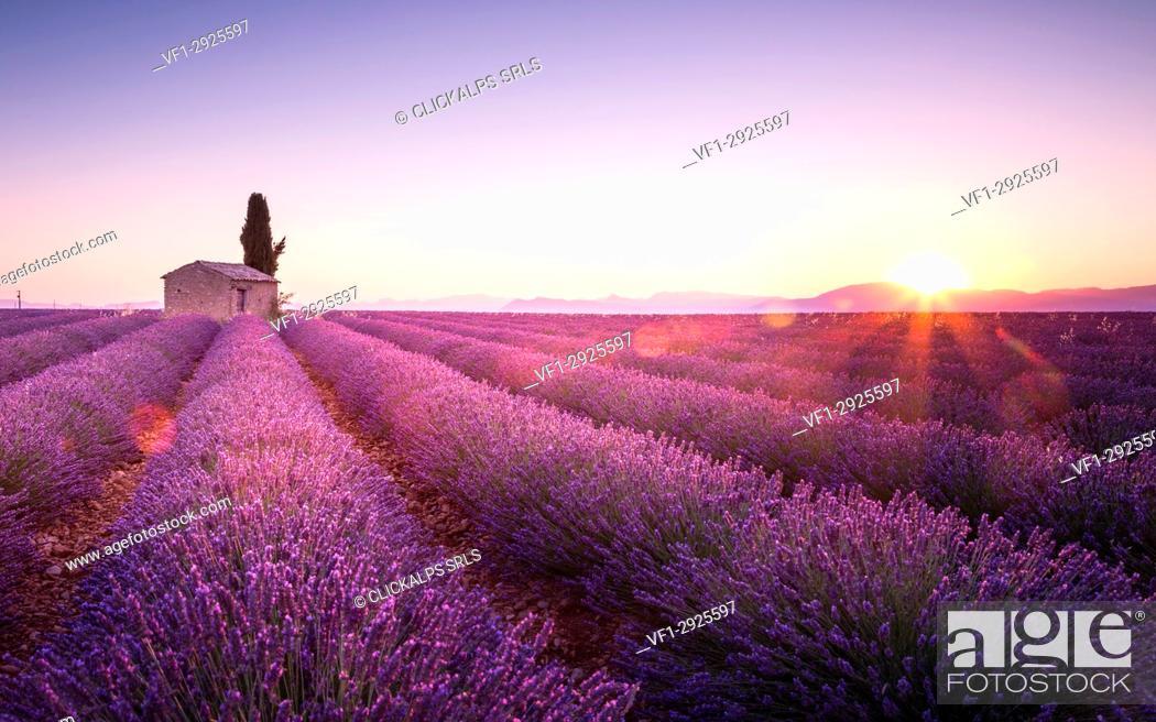 Stock Photo: Sunrise in Plateau de Valensole, Provence - Cote d'Azur, France.