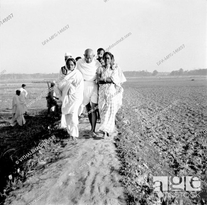 Stock Photo: Mahatma Gandhi ; supported by Amtus Salam and Abha Gandhi ; walking with Sachin Mitra and others through fields in the riot effected areas in Noakhali East.