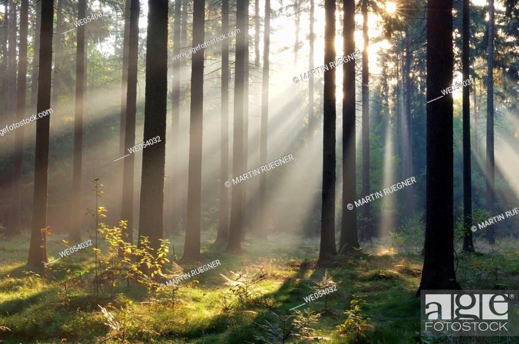 Stock Photo: Sunrays at mist in forest (morning mood). Saxon Switzerland, Saxony, Germany, Europe.
