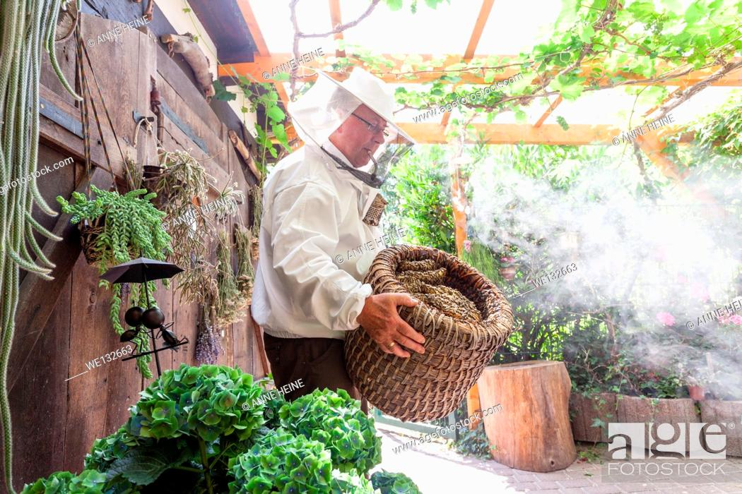 Stock Photo: Hobby beekeeper holding a traditional straw hive with smoker in garden, showing honeycombs inside hive.