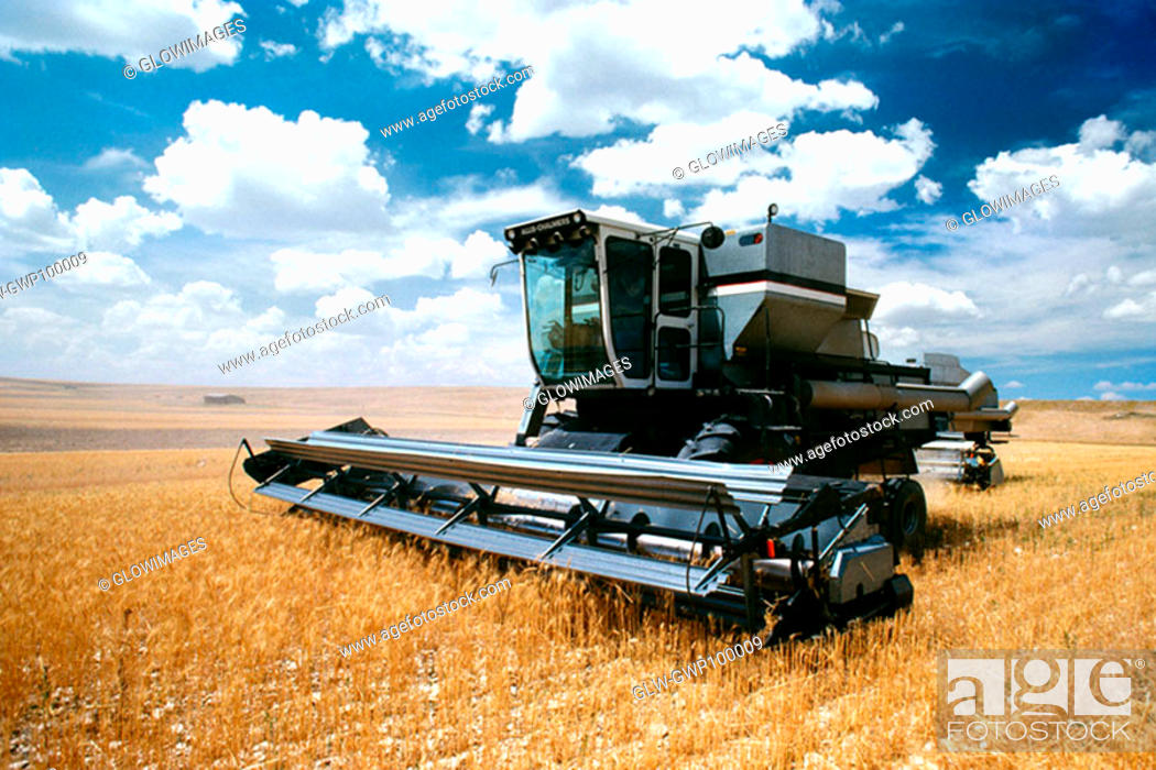 Stock Photo: Custom harvest combine harvest wheat near Cheyenne, WY.