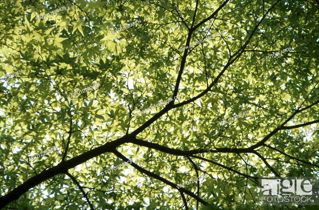 Stock Photo: Green Leaves On Branch.