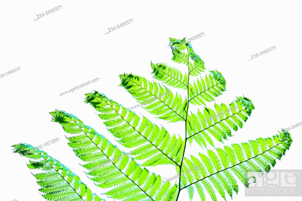 Stock Photo: Closeup of ferns in Topes de Collantes, Trinidad, Republic of Cuba, Caribbean, Central America.