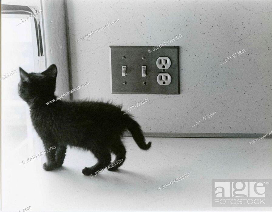 Stock Photo: Black kitten on kitchen counter, next to light switch.