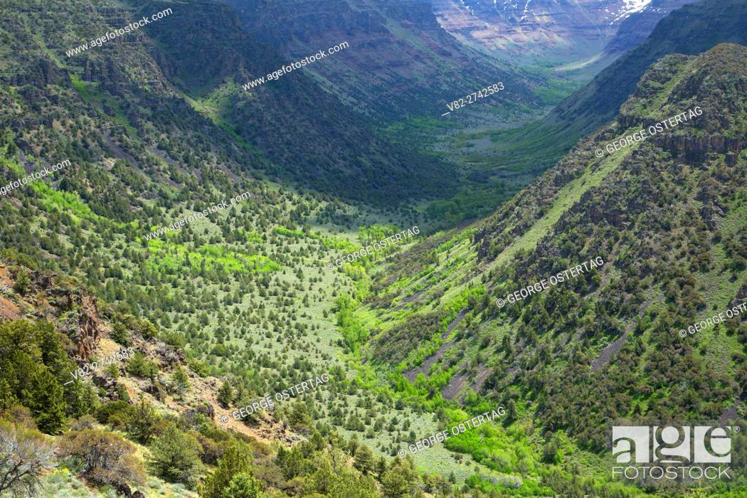 Stock Photo: Big Indian Gorge, Steens Mountain Cooperative Management and Protection Area, Steens Mountain Backcountry Byway, Oregon.
