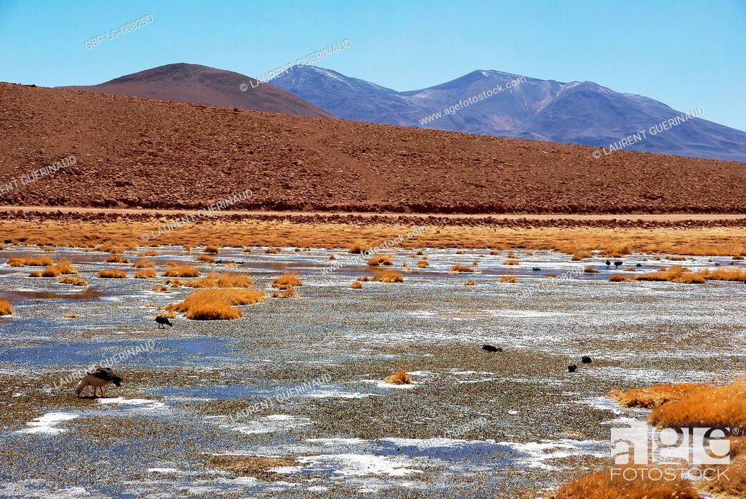 Imagen: Atacama Desert, Region of Antofagasta, Santiago, Chile.