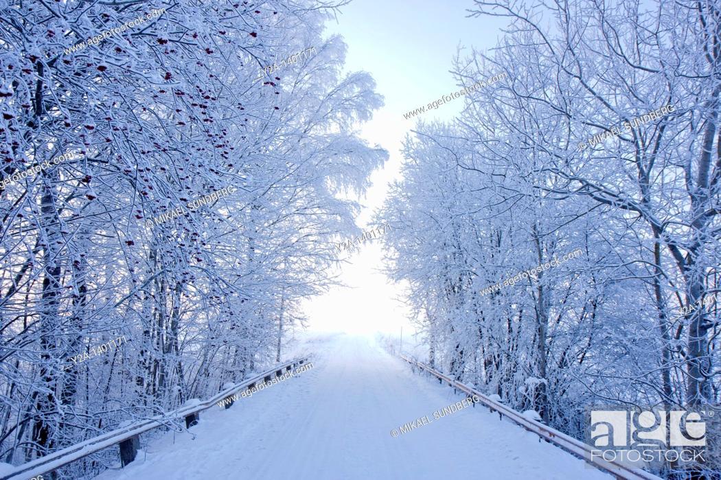 Stock Photo: Karlslund winter way, Sweden.