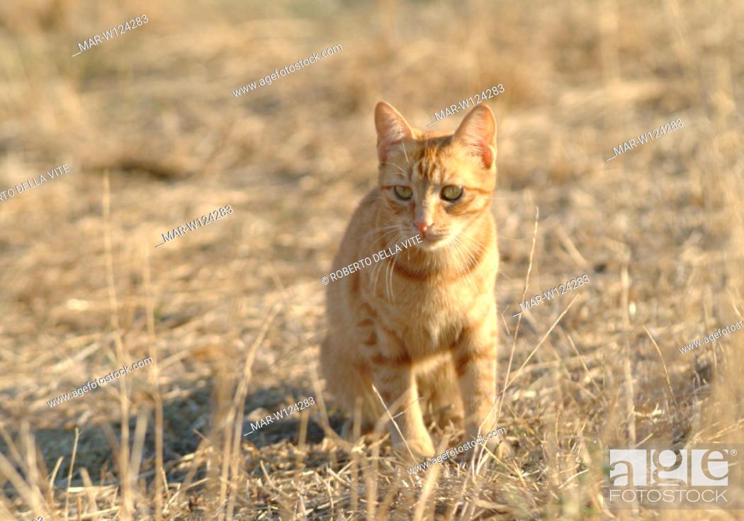Stock Photo: mongrel cat.