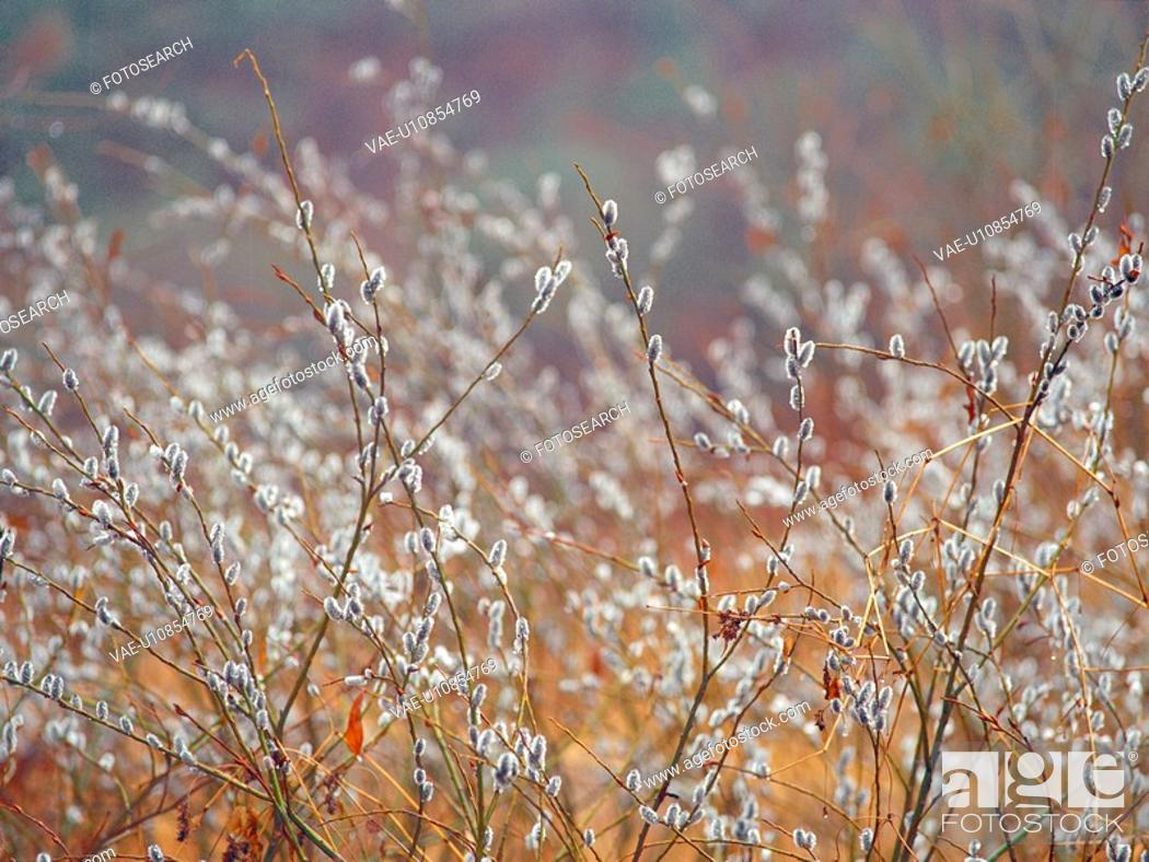 Stock Photo: plants, nature, field, plant, scenery, film.