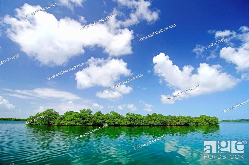 Stock Photo: Mangroves at Bastimentos marine Park, Bocas del Toro islands, Rep.of Panamá, Central America. 2005.