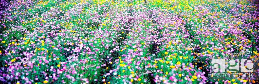 Stock Photo: flower, spring, plants, plant, wild flower, panorama.