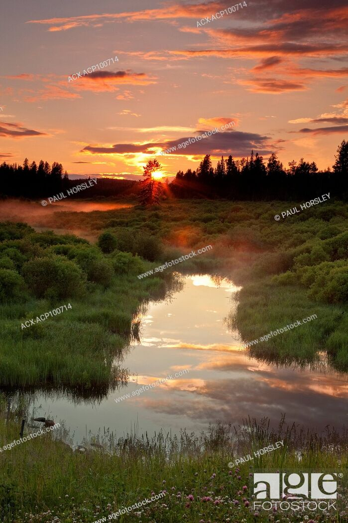 Stock Photo: Sunset over Beaver Pond in Boreal Forest, Alberta, Canada.